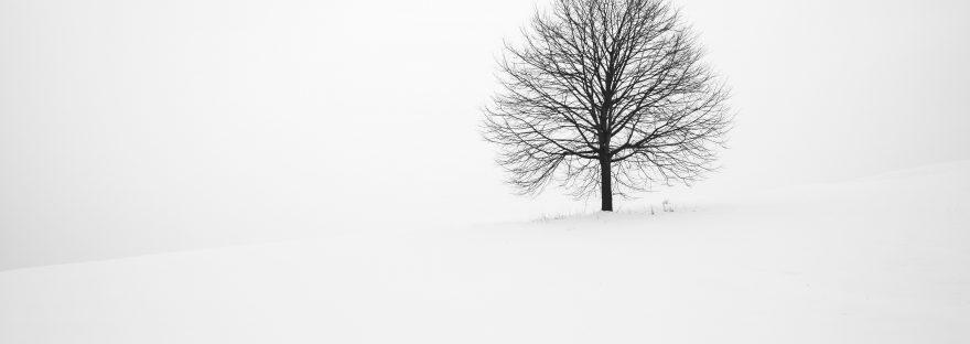 Leafless tree in snowy field against white sky.